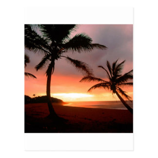 Tropical Island Palms Dominican Republic Postcard