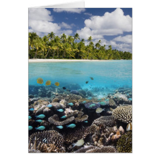 Tropical Lagoon in South Ari Atoll in the Card