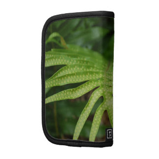 Tropical Leaf Planners