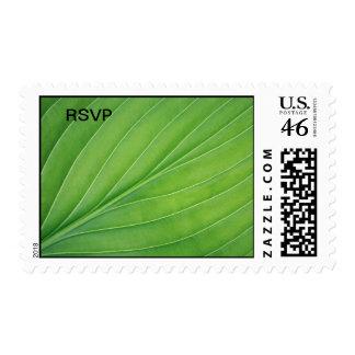 Tropical leaf postage stamp