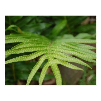 Tropical Leaf Postcard