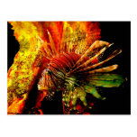 Tropical Lionfish Photo Art Postcard