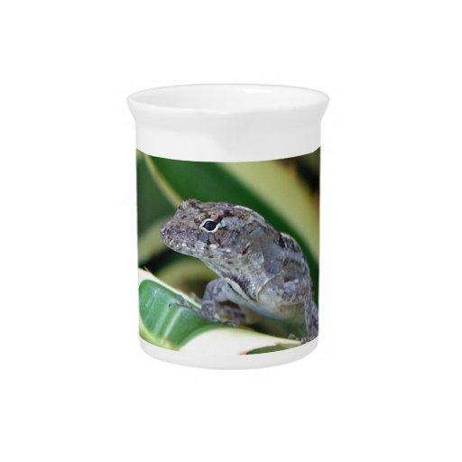 Tropical Lizard - Florida Beverage Pitcher