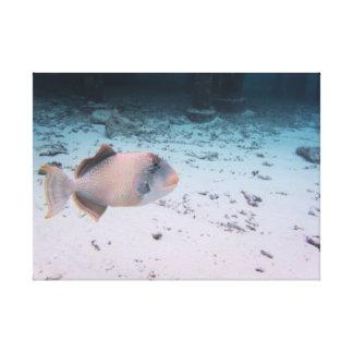 Tropical Maldives Coral Fish Turquoise Sea Canvas Print