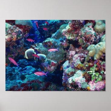 Art Themed Tropical Marine Life Poster