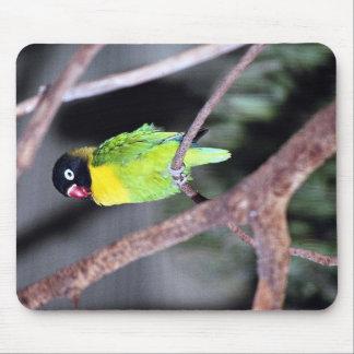 Tropical masked lovebird mousepads