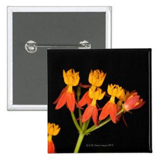Tropical Milkweed  (Asclepias curassavica) - Pinback Button