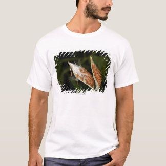 Tropical Milkweed  seed pods (Asclepias T-Shirt
