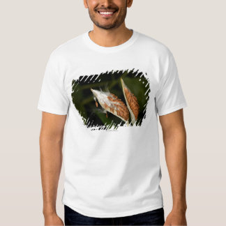 Tropical Milkweed  seed pods (Asclepias Tee Shirts