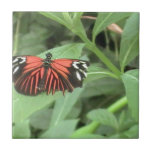 Tropical orange butterfly tile