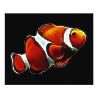 Tropical Orange Clownfish Clown Fish Flyer