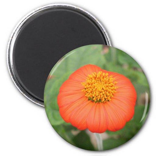 Tropical Orange Flower 2 Inch Round Magnet