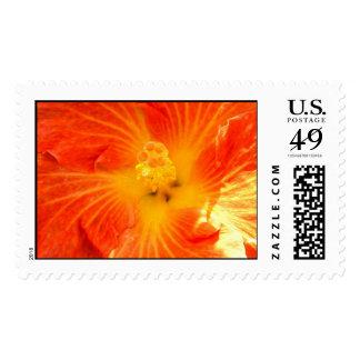Tropical Orange Hibiscus Postage