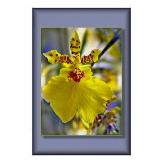 Tropical Orchid Bloom Poster
