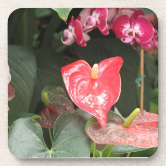 Tropical Orchid flowers Beverage Coasters