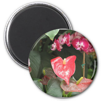Tropical Orchid flowers Magnets