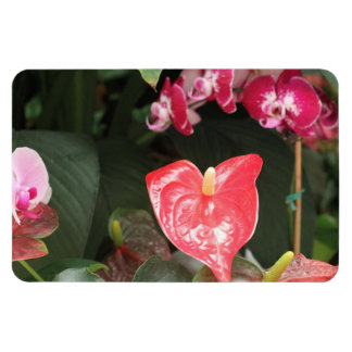 Tropical Orchid flowers Rectangular Magnet
