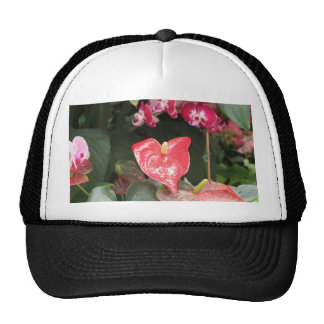 Tropical Orchid flowers Trucker Hat