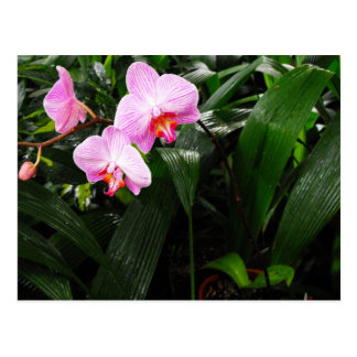 Tropical Orchid in Botanical Garden Postcard