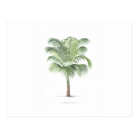 Tropical Palm collection - image 1 Postcard
