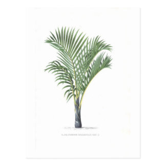Tropical Palm collection - image 3 Postcard