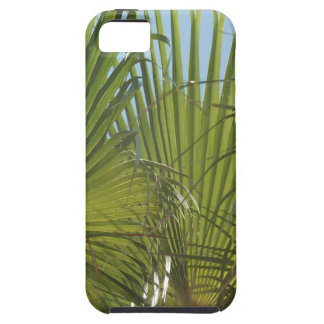 Tropical palm iPhone SE/5/5s case