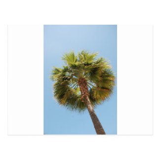 Tropical palm postcard