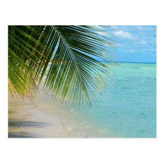 Tropical palm tree and ocean on beach postcard
