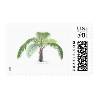 tropical palm tree collection - drawing VI Postage