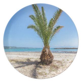 Tropical palm tree on sandy beach plate