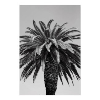Tropical Palm Tree Poster,Print