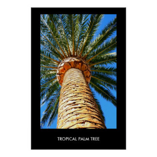 Tropical Palm Tree Poster,Print Poster