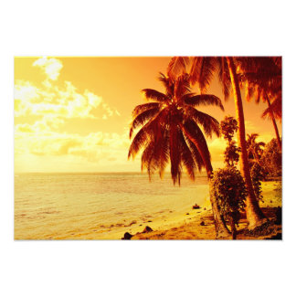 Tropical palm trees at a beach at sunset photo