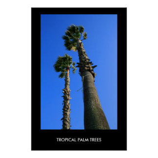 Tropical Palm Trees Poster,Print Poster