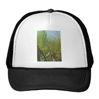 Tropical palm trucker hat