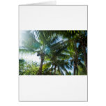 Tropical palms lit by the sun greeting card