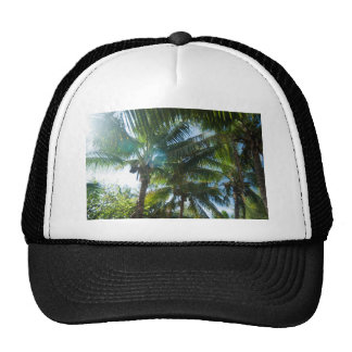 Tropical palms lit by the sun hat
