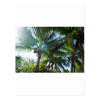 Tropical palms lit by the sun postcard
