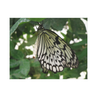 Tropical Paper Kite Butterfly Canvas Print
