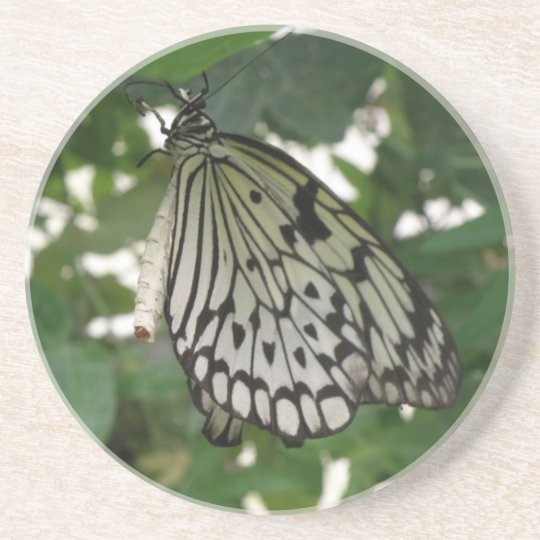 Tropical Paper Kite Butterfly Coasters