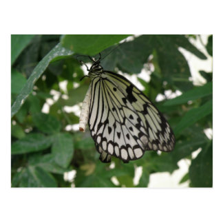 Tropical Paper Kite Butterfly Postcard
