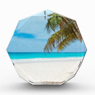 Tropical Paradise Beach Awards