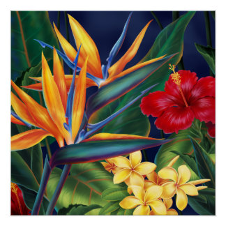 Tropical Paradise Hawaiian Floral Poster