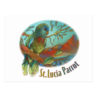 Tropical Parrot of St Lucia Postcard