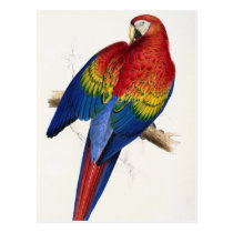Tropical Parrot Postcard