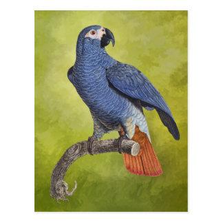 Tropical Parrot Vintage Illustration Postcard