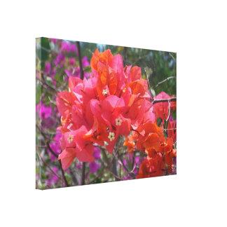 Tropical Pink Bougainvillea Canvas Print