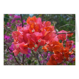 Tropical Pink Bougainvillea Card