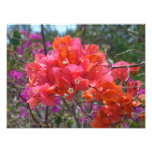 Tropical Pink Bougainvillea Photo Print