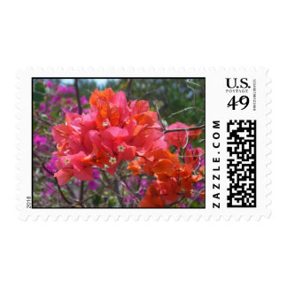 Tropical Pink Bougainvillea Postage